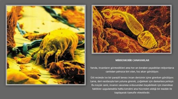 mikrop.jpg